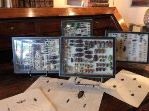 série de 4 coffrets entomologiques